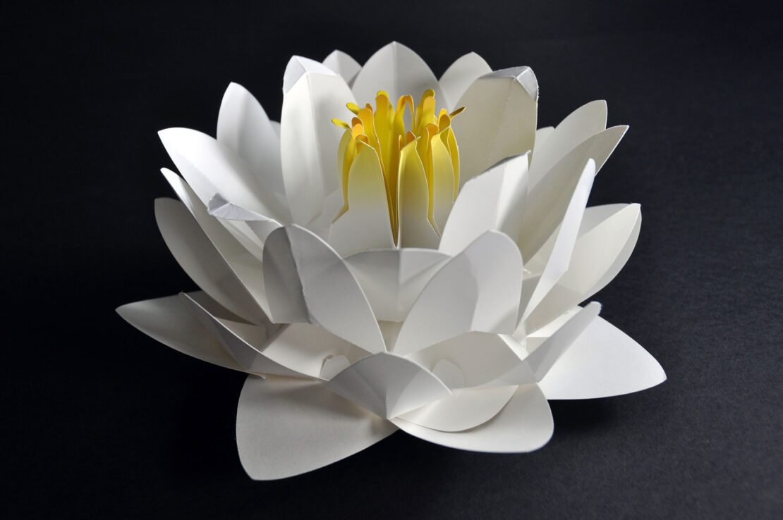 3d water lily pop up