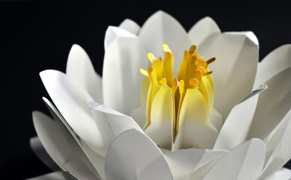 3d water lily pop up close