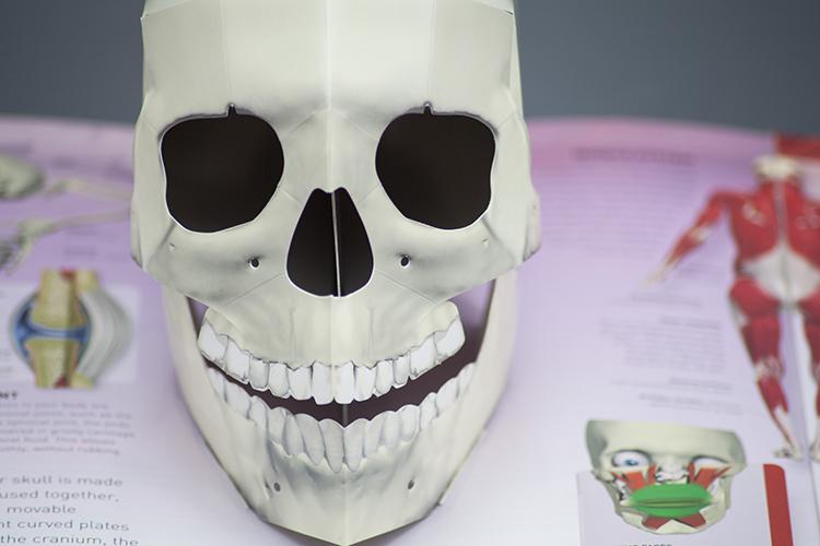 Pop-up paper skull