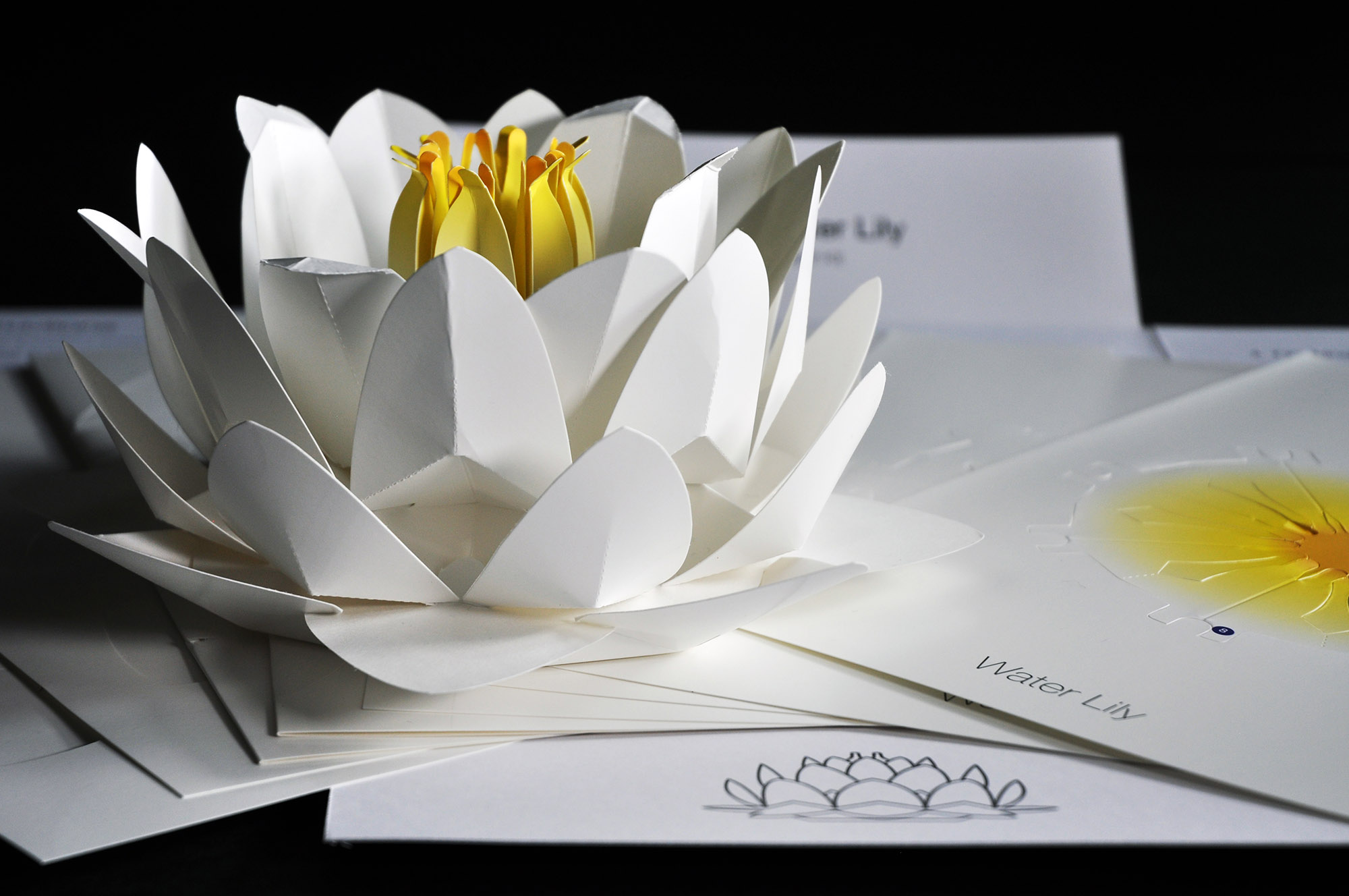 How to Make a Lily | Origami - YouTube | 1328x2000