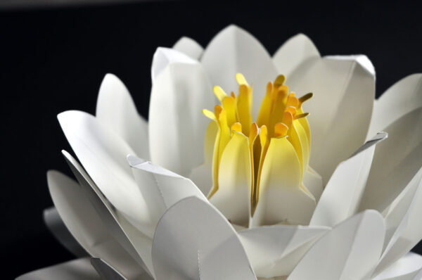 Origami Water Lily Kit close-up